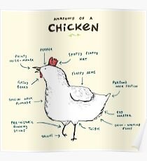 Anatomy of a Chicken Poster