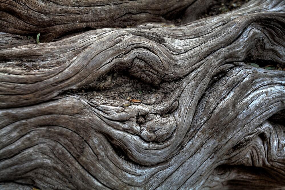 WoodFreak by Bob Larson