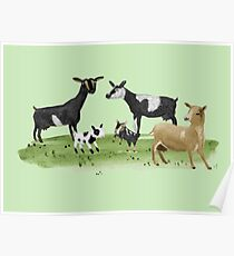 Dairy Goats Poster