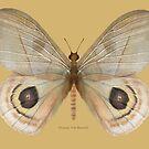 Peeping Tom Butterfly by Walter Colvin