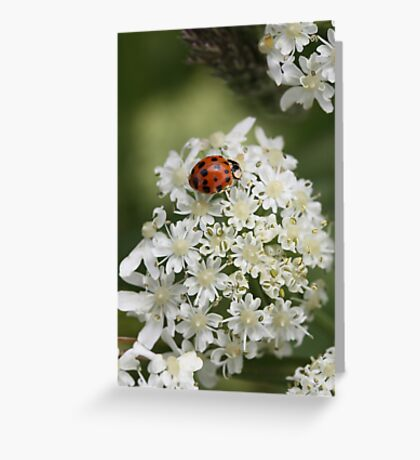 Lady in Lace Greeting Card
