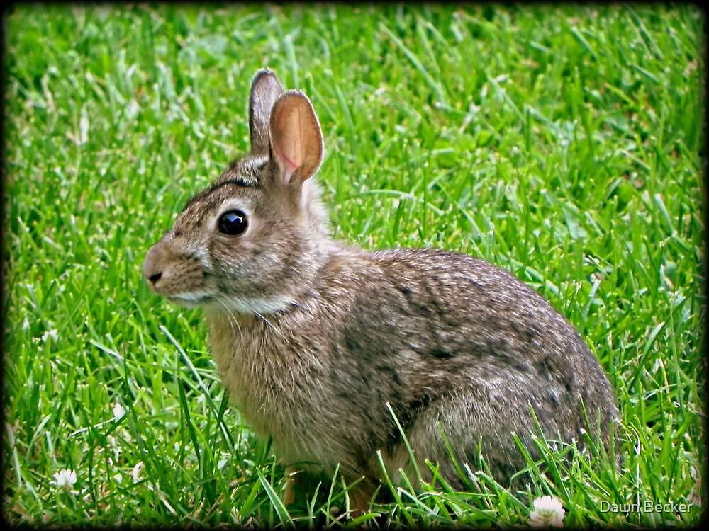 Bunny Baby © by Dawn Becker