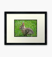 Bunny Baby © Framed Print
