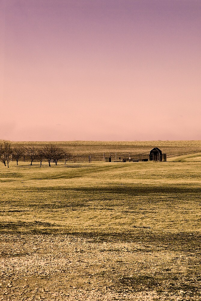Country Meadow by Joy  Rector