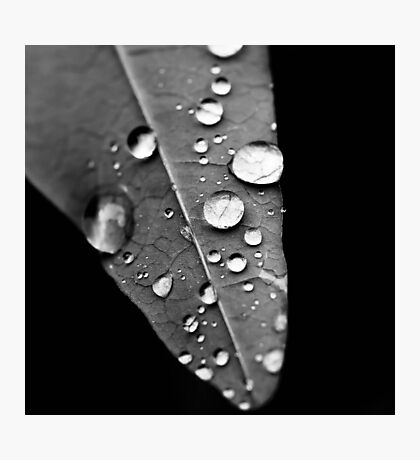Water drop on leaf IV Photographic Print