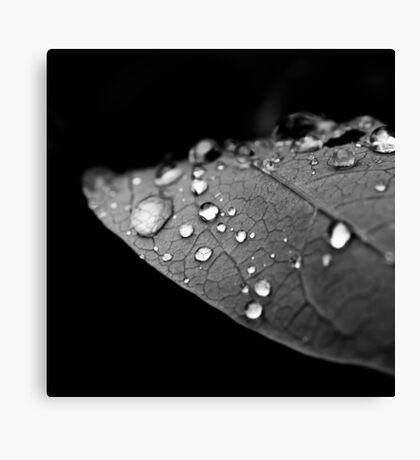 Water drop on leaf V Canvas Print