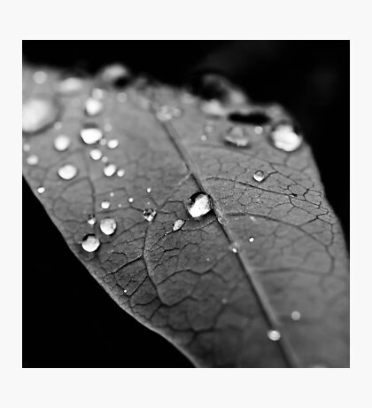 Water drop on leaf VI Photographic Print
