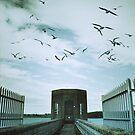 Pitsford Reservoir by Nikki Smith