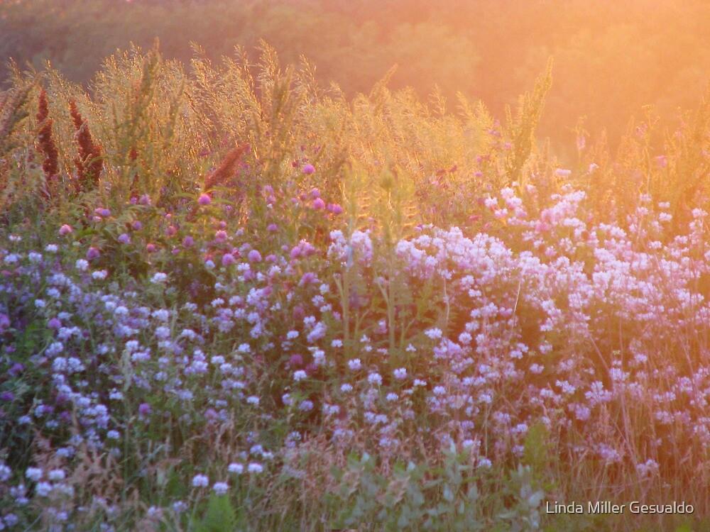 Softness Is  Beautiful  (Wild Flowers) by Linda Miller Gesualdo