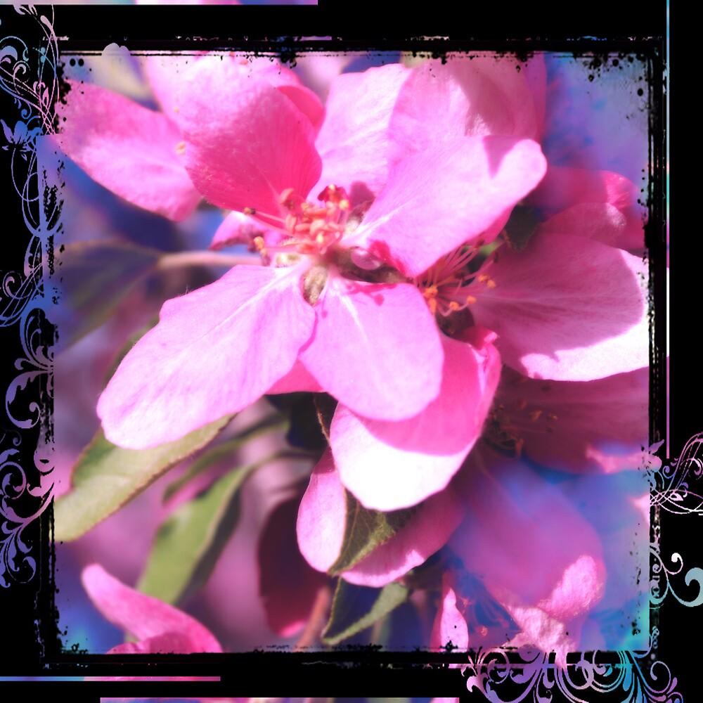 My pink flower by miyoshiwied