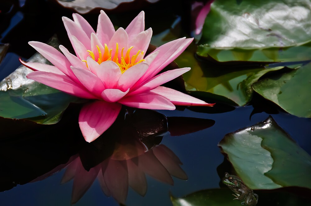 The Lily Pond by jules572