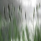 Reeds Abstract - green by KUJO-Photo