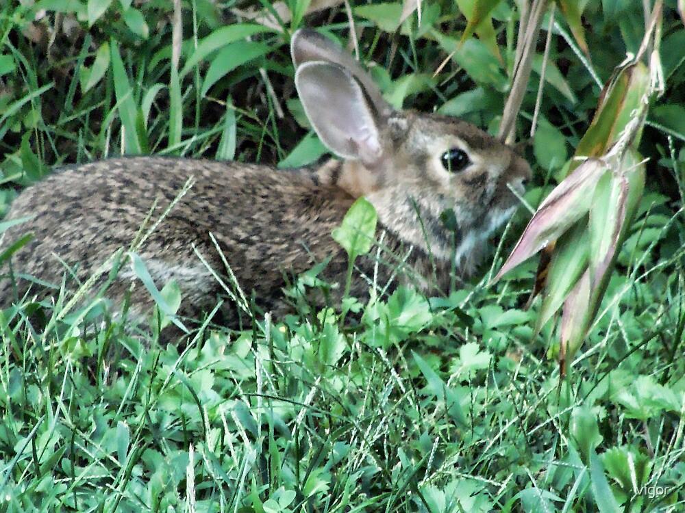Bunny Rabbit by vigor