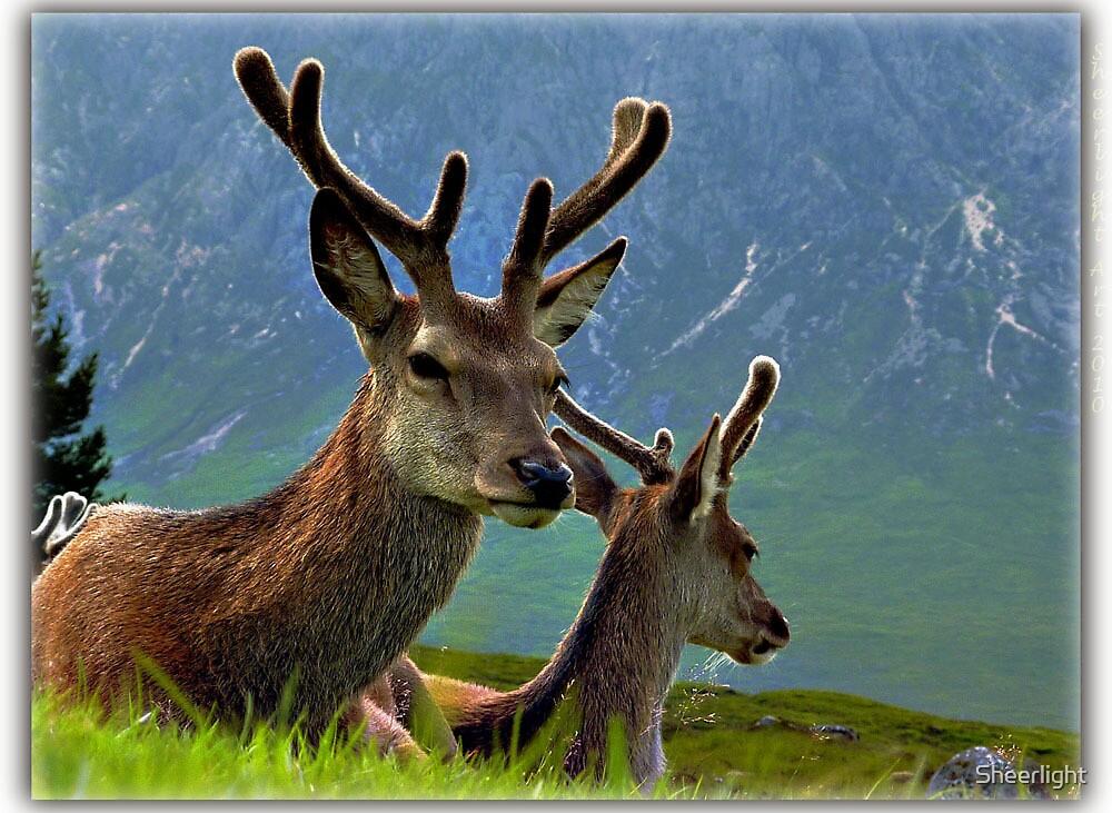 Deer of Glencoe by Sheerlight