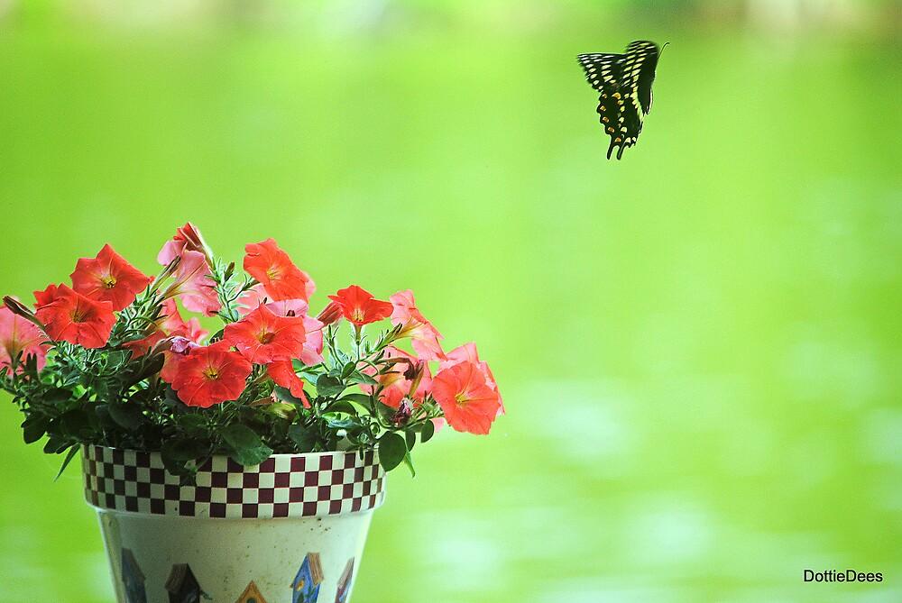 Fly Away by DottieDees