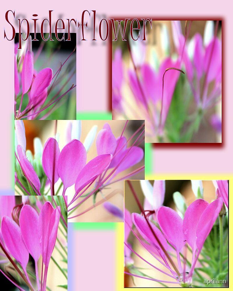 Spiderflower Collage by aprilann