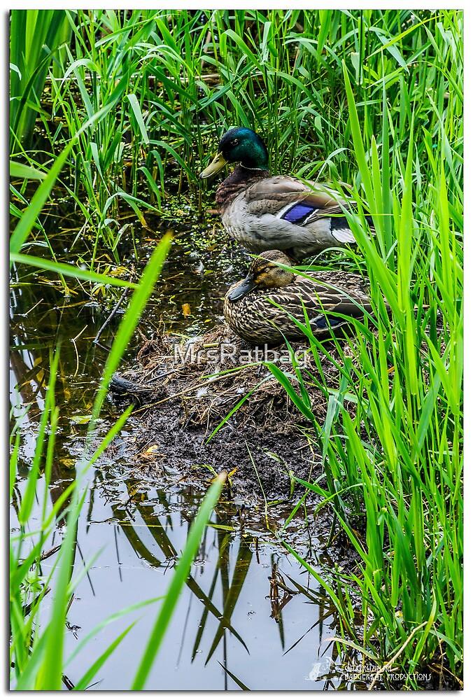 Nesting by MrsRatbag