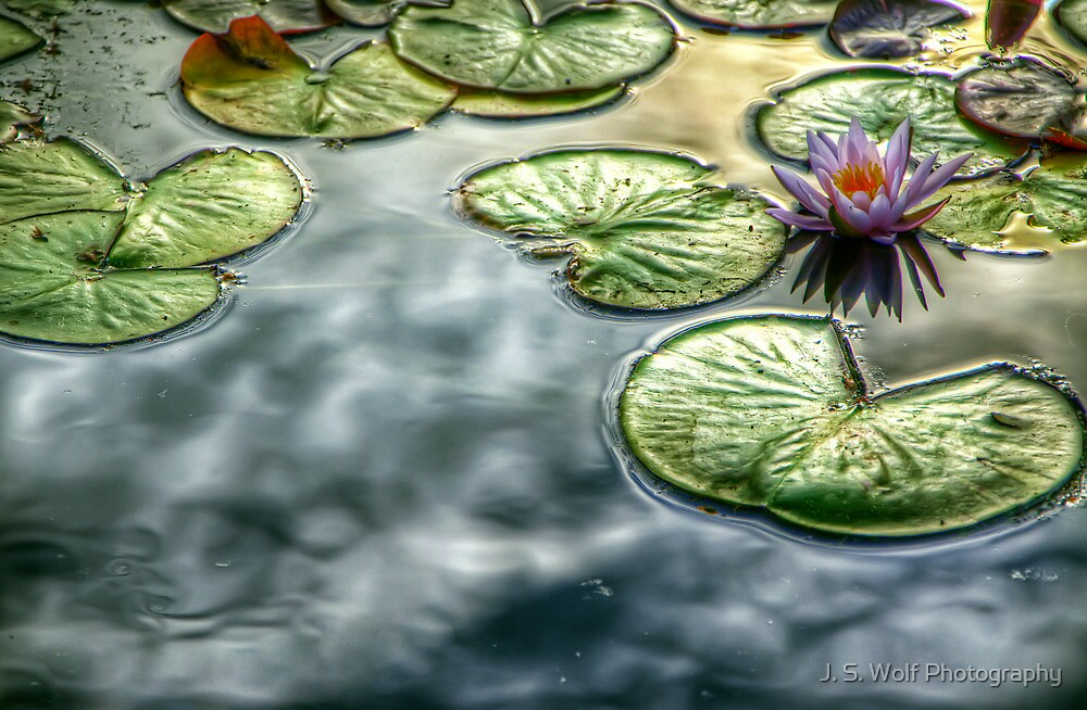Lillies by jswolfphoto