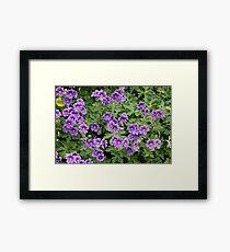 BORDER PLANT . Framed Print