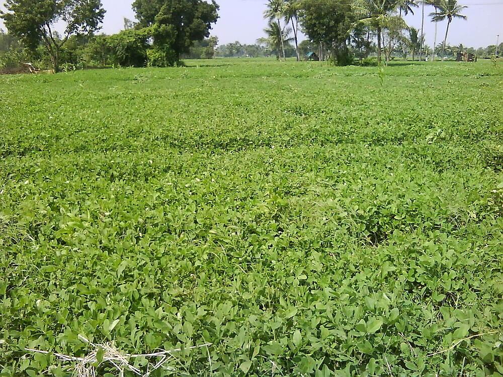 Greenish Tamil Nadu India by ramabhpl