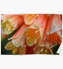 Macro Flowers Poster