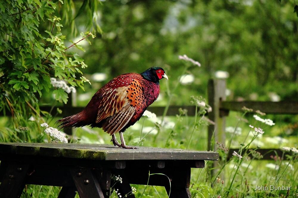 Table ready bird by John Dunbar