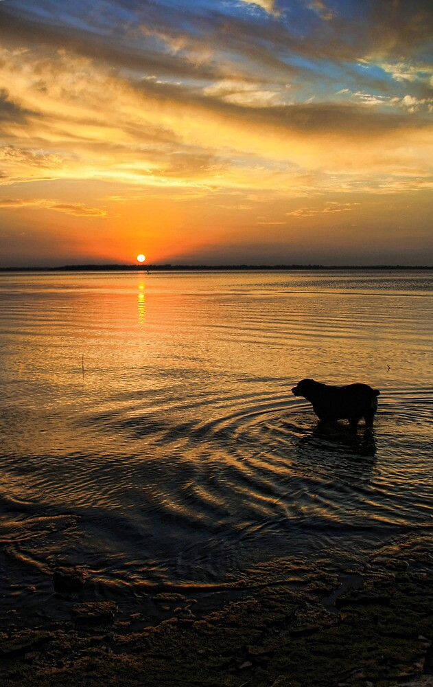 Sunset Watcher by Carolyn  Fletcher