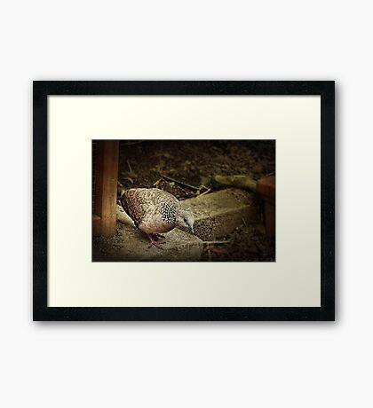Garden Visitor Framed Print