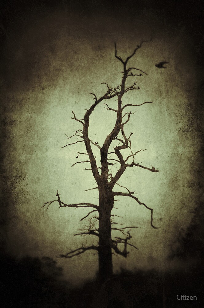 The dead zone by Nikki Smith