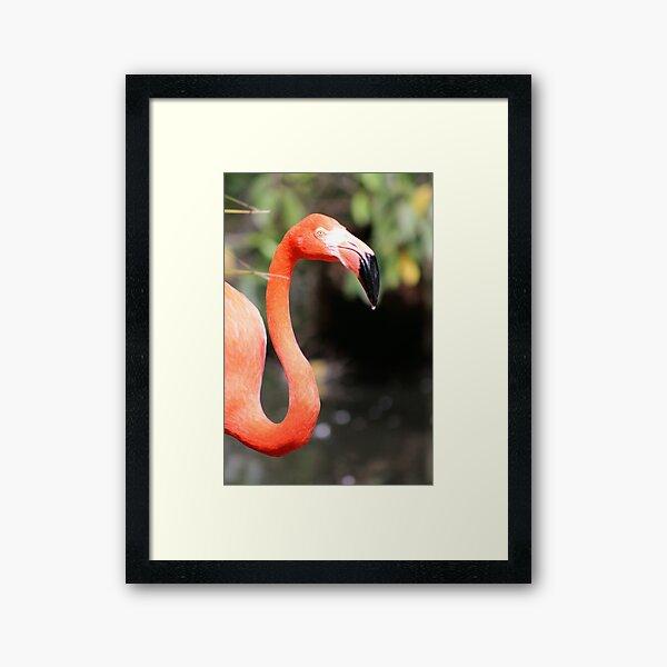 Flamingo Droplet Framed Art Print