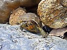 Camouflage Turtle  by FrankieCat