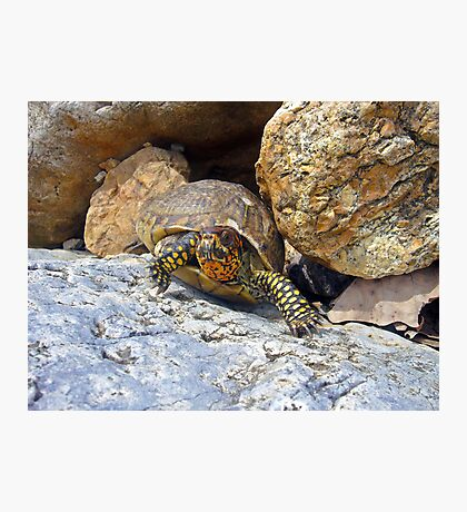 Camouflage Turtle  Photographic Print