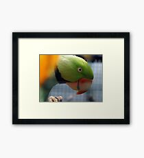 Green Parrot. Framed Print