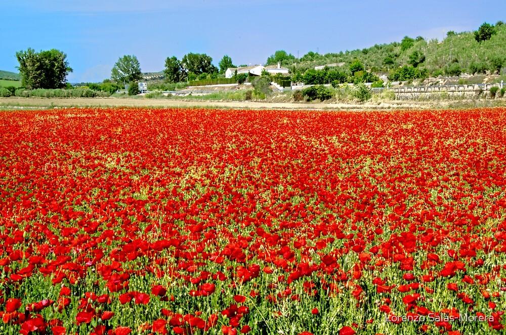Poppies field by Lorenzo Salas-Morera