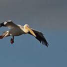 Landing approach...... by Macky