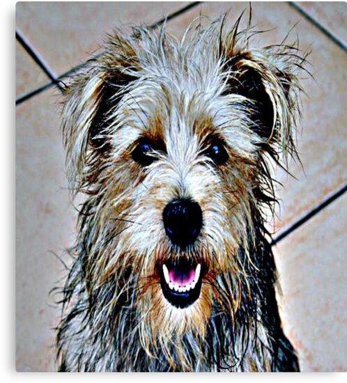 Colorful Dog by iggys