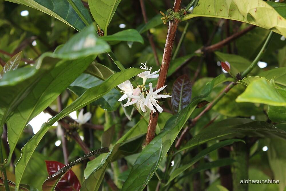 A precious spice tree by alohasunshine