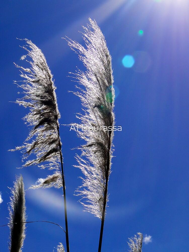 Pampas Grass II by Al Bourassa