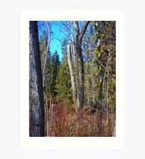 Aspen parkland in spring. Art Print