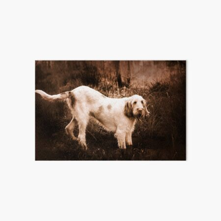 Standing an a swamp Spinone Art Board Print