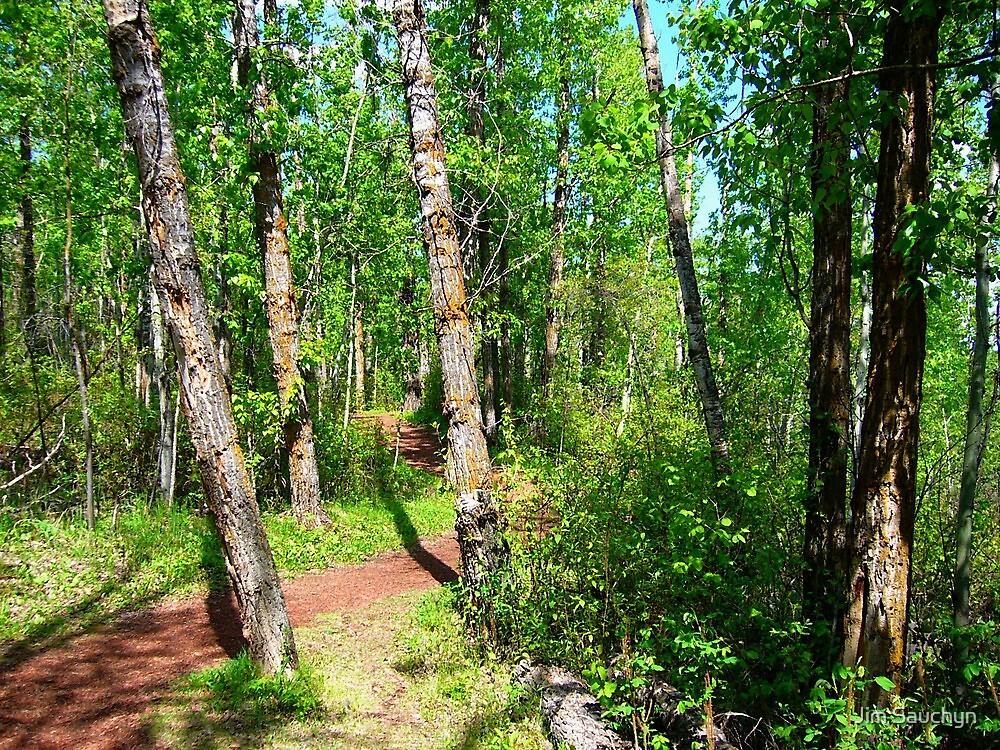 Winding walking trail by Jim Sauchyn
