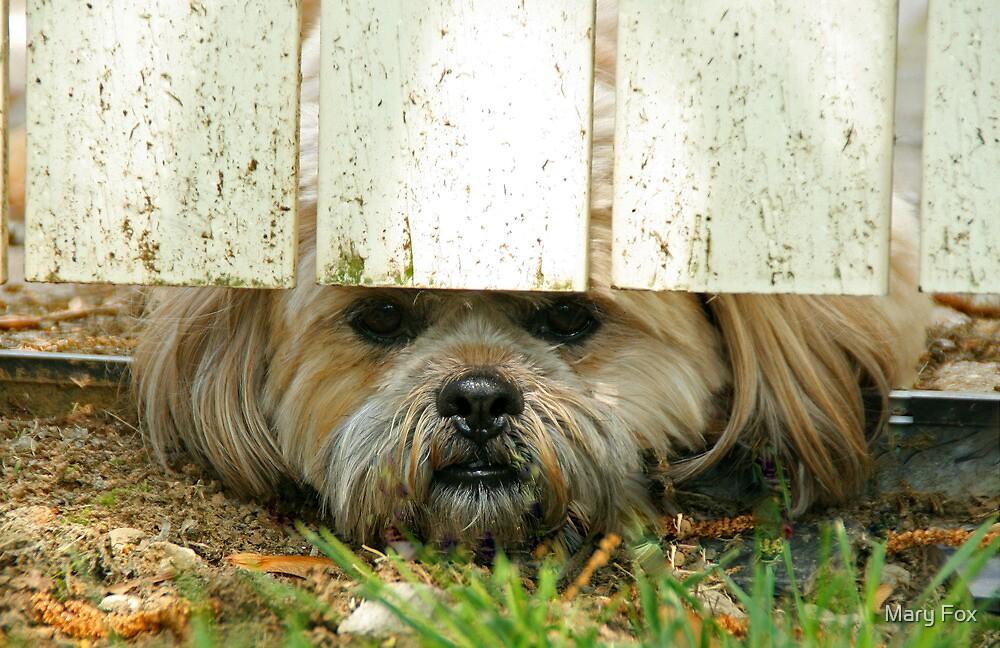 Peek-a-boo! by Mary Fox