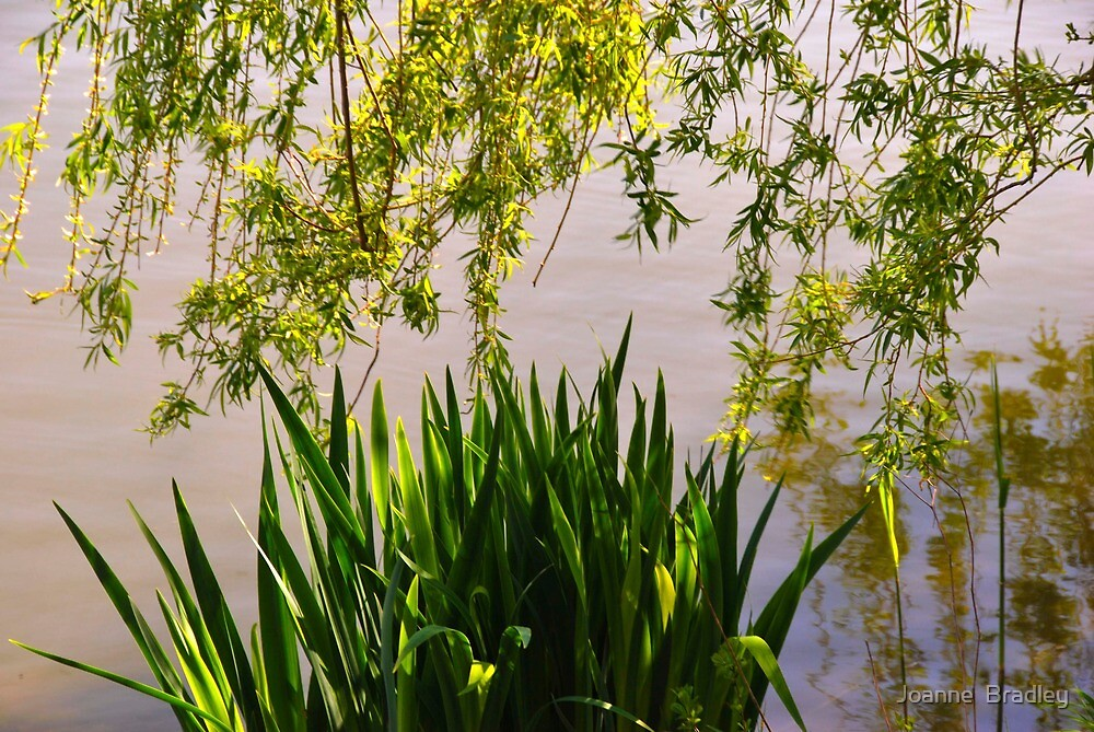 Spring Foliage and Reflections by Joanne  Bradley