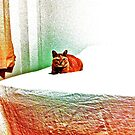 My bed, my TV, my room...for a bossy cat! mow... by Kornrawiee
