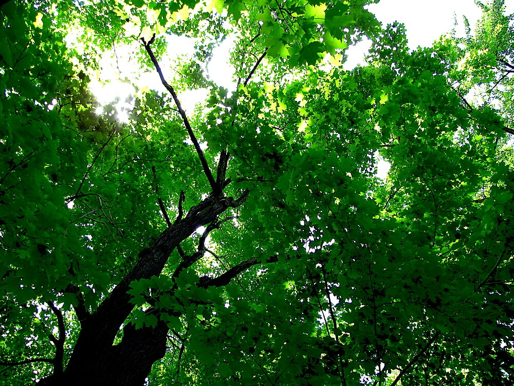 Green canopy by AndreCosto