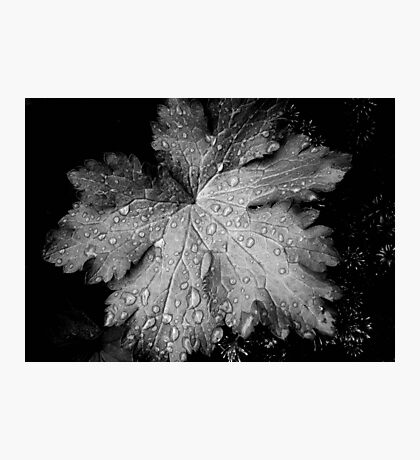 Leaf with raindrops, a black and white study Photographic Print