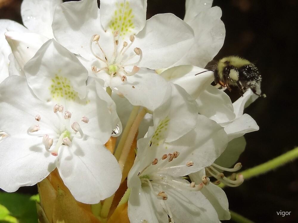 flight of the Bumblebee by vigor