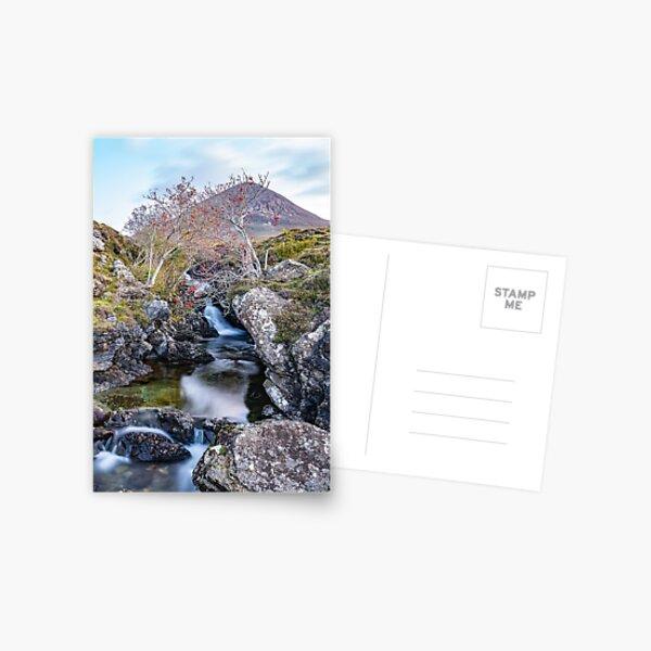 Last of the Rowan Berries Postcard