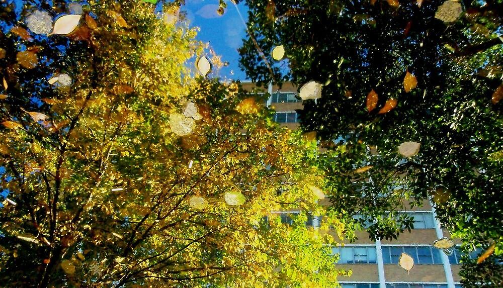 Autumn falling by tanyamatheson