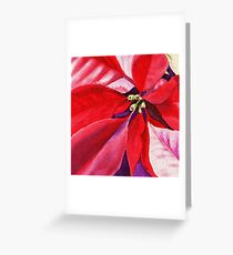 Christmas Red Poinsettia  Greeting Card